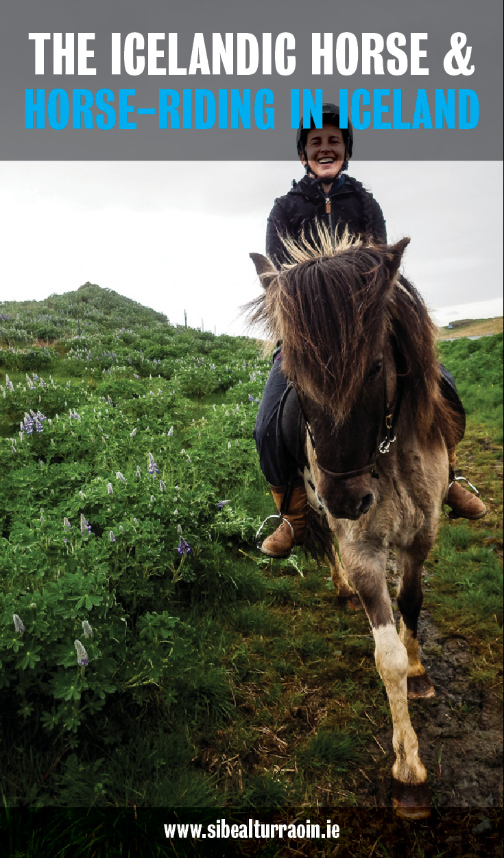 The Icelandic Horse & Horse-riding in Iceland, Núpshestar. © Núpshestar